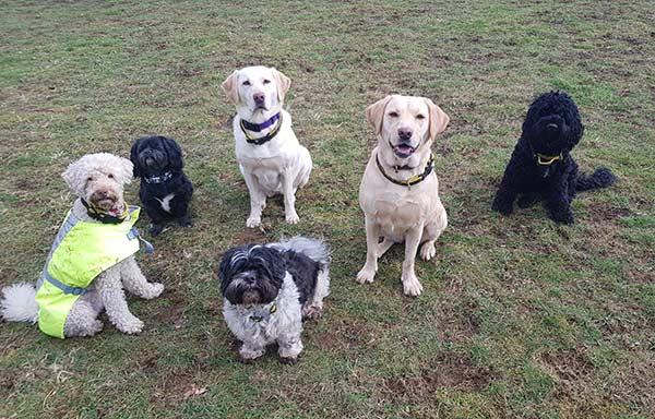 Dog Walking - Group Walk