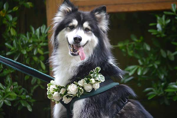 Wedding Woofers