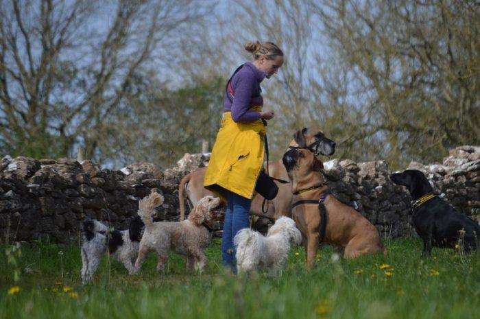 Heather's Dog Walking Service