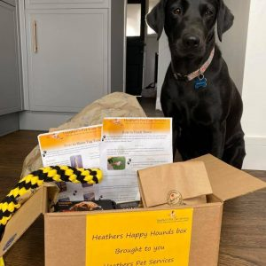dog delivery box